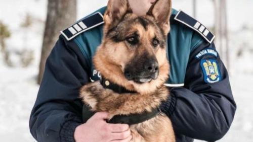 Câinele Max A PRINS hoțul, care a fugit după ce a FURAT ditr-o mașină, luându-i urma
