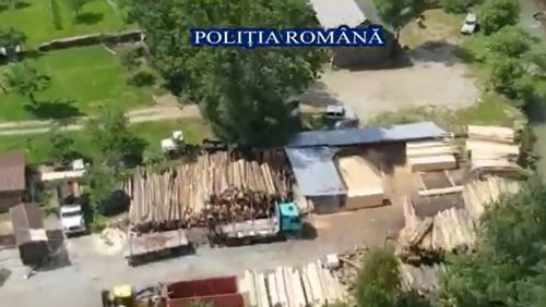 VIDEO. Polițiștii verifică 5 OCOALE silvice din Maramureș și 15 FIRME,  pentru prevenirea și combaterea tăierilor ilegale de arbori