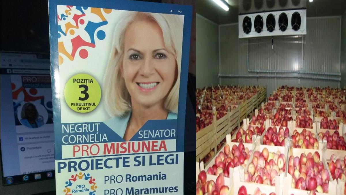 Cornelia Negruț-PRO Misiunea ieșirii din criză